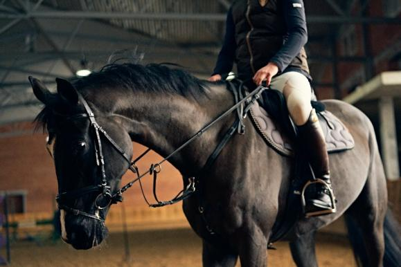stage équitation perfectionnement